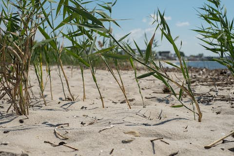 Strands of grass poking through the sand