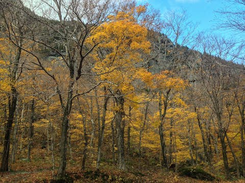 looking up at a sheer rock face, with bare trees and yellow aspen leaves in the foreground