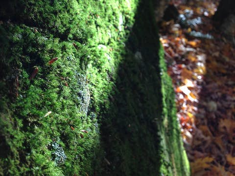 thick moss covering an entire rock surface near the forest floor