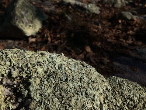Close-up of lichens on a boulder