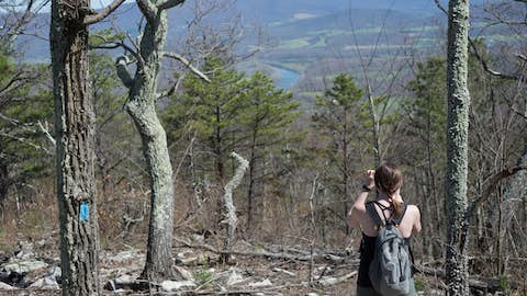 Jean stands among bare tree trunks looking down to a river valley from the top of a mountain